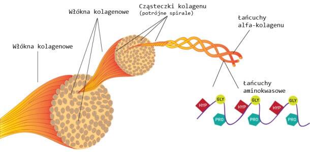 kolagen do stawów